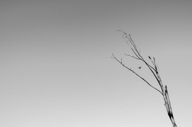 عکاسی با لنز واید